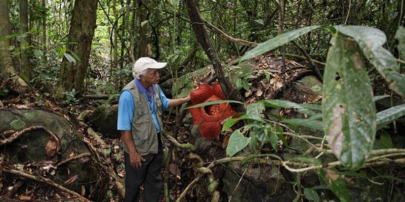 Gunung gading rafflesia safari_2