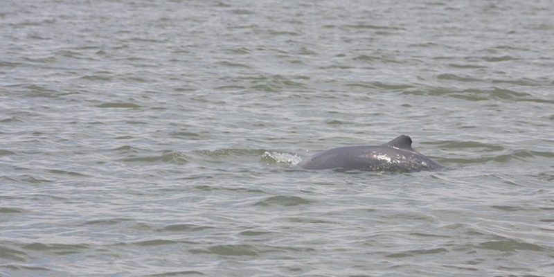 Mangrove & Irrawaddy Dolphin Watching Cruise_2