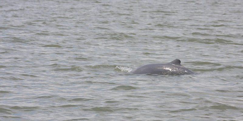 Mangrove & Irrawaddy Dolphin Watching Cruise_2