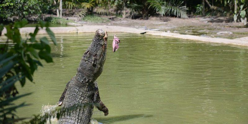jong crocodile farm_1