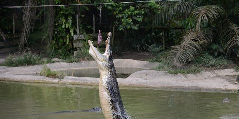 jong crocodile farm_5